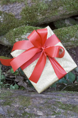 Gift on branch / Gift box on branch with moss in woods.