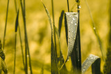 In einem Zerrspiegel: Gras