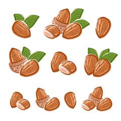 Almonds set. Vector