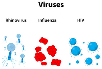 Rhinovirus, Influenza and HIV