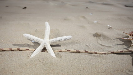 Starfishes, seashell and rope on the beach. HD motorized slider.