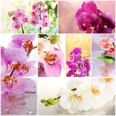 Collage of beautiful orchids
