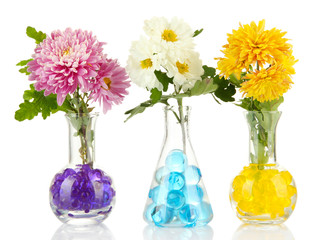 Beautiful flowers in vases with hydrogel isolated on white