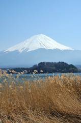 Mt. Fuji with field at kawaguchi lake