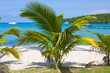 Tropical beach with exotic palm trees, Thailand