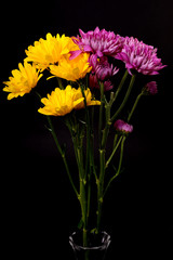 Yellow daisies and Chrysanthemums