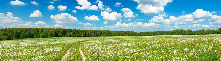 summer landscape panorama with  blossoming  field