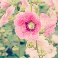 Hollyhock flower old vintage retro style