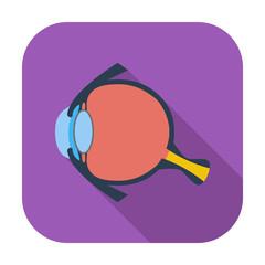 Anatomy eye.