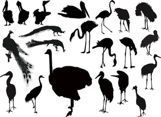 twenty one bird silhouettes on white