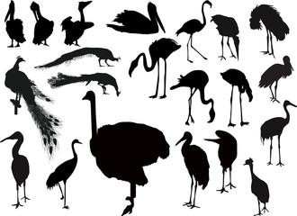 twenty one bird silhouettes on white