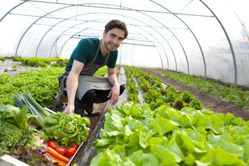 Young attractive farmer harvesting vegetables