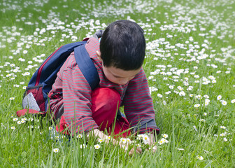 Child picking daises