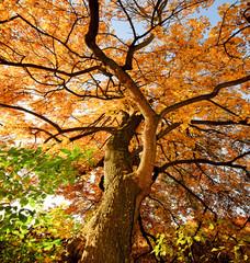 Herbstbaum :))