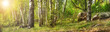 Forest with birches
