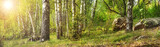 Forest with birches - 65705890