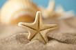 Starfish and seashells on beach - 65707658