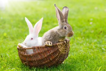 Two rabbits in wicker basket