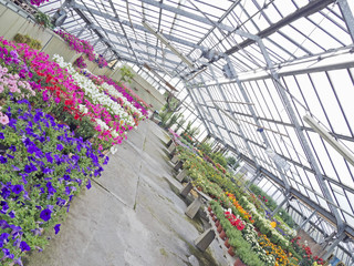 greenhouse with colored flowers   view from different angle