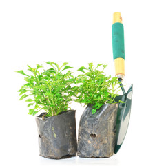 Watercress and Garden trowel