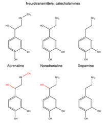 Сhemical formulas of neurotransmitters (catecholamines)
