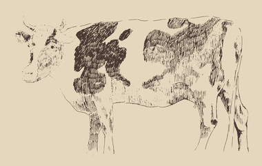 spotted cow, vintage illustration, engraved style