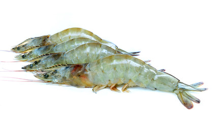 Shrimp on white background.