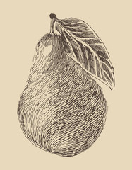 pear vintage illustration, engraved retro style