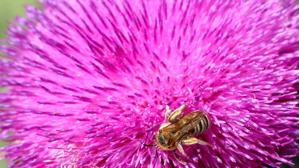 bee on flower nature background
