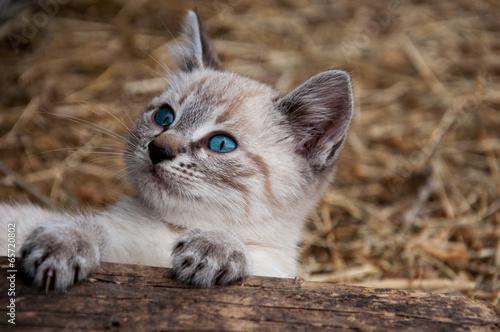 canvas print picture Kätzchen im Stroh