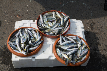 Fresh fish for sale at a fish market
