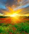 Очарование цветочных полей