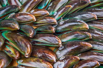 Close up view of a group of mussel