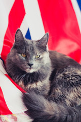 Cat on union jack