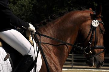 Im Satteln sitzen, das Pferd reiten und zügeln