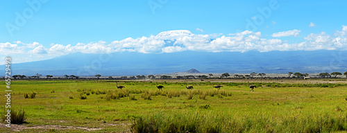 Fotobehang Struisvogel Ostriches Kilimanjaro