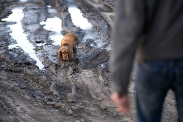 dog comes out of the mud guiltily