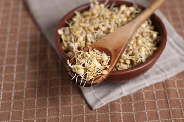 germogli di lenticchie