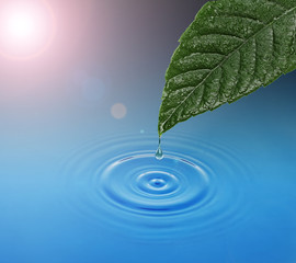 Green leaf with water drop falling. Blue waves