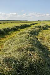 Mowed hay.