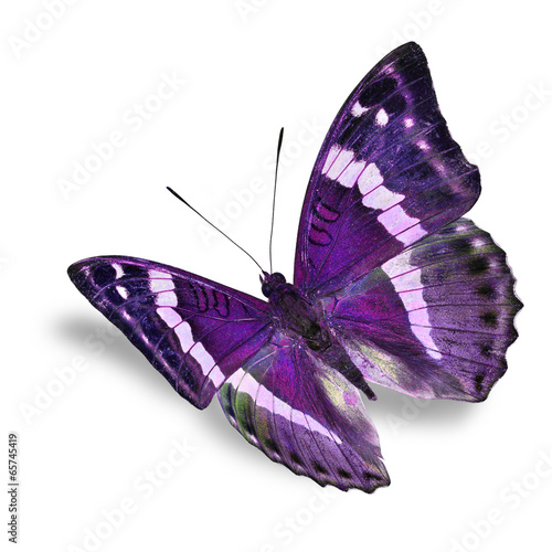 Deurstickers Vlinder purple butterfly