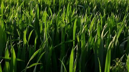 grass with sun rays