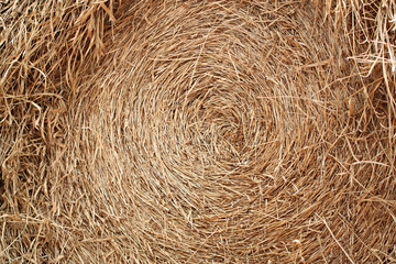 Rice straw after harvest.