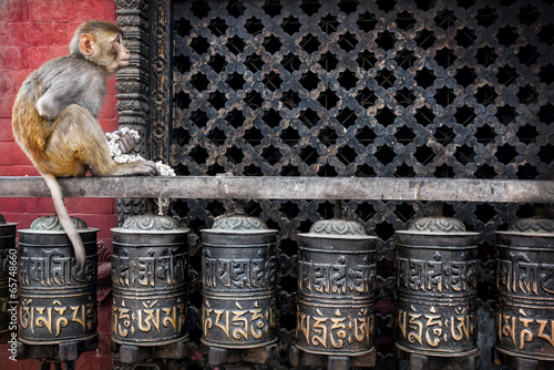 Fotobehang Nepal Monkey on prayer wheels in Nepal