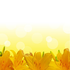 Yellow Lilies Border