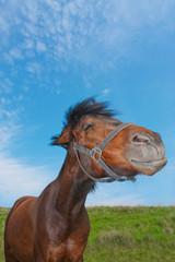 Lustiges Pferd auf einer Wiese