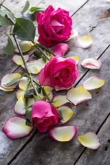 Rose and Rose petals lying down on a wooden table