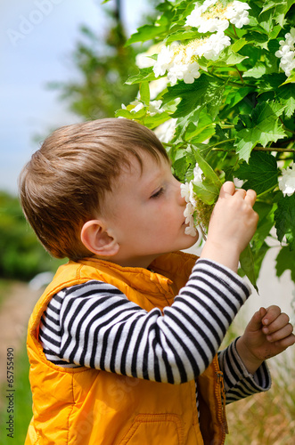 Cute young boy smelling spring blossom
