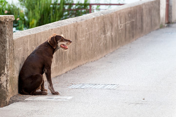 Lonely stray dog ​​on the street