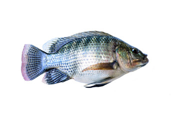 Fresh fish isolated on a white background